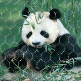 2017 Fios de aço inoxidável de malha de corda para animais de jardim zoológico