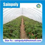 農業のコショウのための単一のスパンのトンネルの温室