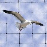 Плетение птицы моноволокна, черный белый/красный цвет
