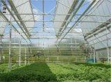 Polycarbonat-Blatt PC Blatt-Landwirtschafts-Gewächshäuser