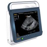 PT50d'un Vétérinaire Animal Test de grossesse échographie