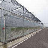 De LandbouwSerre van de Serre van Venlo van het glas met Hydroponic Systemen van de Serre
