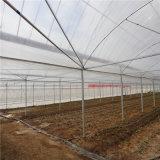 Fabriek van China galvaniseerde Hydroponic Serre van het Glas