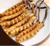 Cordyceps Sinensis 100%の自然な乾燥した野生