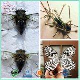 Pin entomológico do inseto dos tamanhos superiores de Quanlity 7 para a coleção de espécime