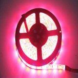 Striscia di lunga vita di 72LEDs/M 50m SMD 5050 LED per la lampadina