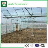 야채 또는 정원 또는 꽃 또는 농장 다중 경간 필름 온실