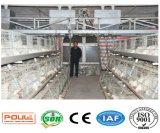 Новое оборудование клетки птицефермы для цыпленка бройлера (типа рамка)