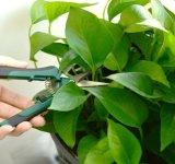 С другой стороны Pruner прямой нож садовника Pruning срезных шплинтов