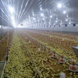 Poultry farm equipment with Good quality in Hot of halls