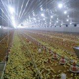 Matériel de ferme avicole avec la bonne qualité dans la vente chaude