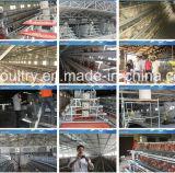 Codorniz de Cultivo / granjas avícolas / Maquinaria de pollo (A4L120)