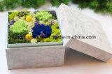 Presente de casamento Handmade preservado da flor do cravo natural