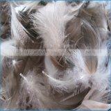Branca ou cinza para baixo para penas de Retalhos