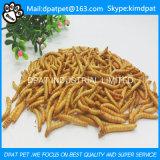 고품질 황색에 의하여 말리는 Mealworms 새 음식