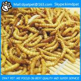 Larva de farinha secada Tenebrio Molito do alimento de animal de estimação