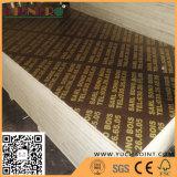 le film de faisceau de peuplier de 1220*2440 millimètre a fait face au contre-plaqué de Linyi