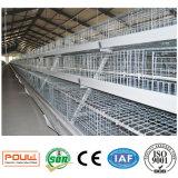 Cage de poulet de poulette de grande capacité de Fram de volaille avec ISO9001