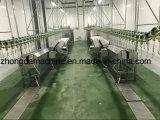 Équipement complet d'abattage de poulet au Moyen-Orient