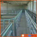 Macchina di macello del bestiame di Halal della strumentazione del macello per la regione del Medio Oriente