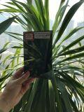 Donker Grijs Glas Reflctive met Ce. ISO (4mm tot 10mm)
