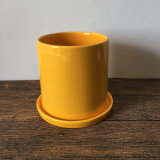 Лоснистый желтый круглый самомоднейший плантатор