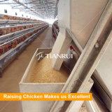 Projet de ferme de poulet Auto-aviateur automatique à vendre