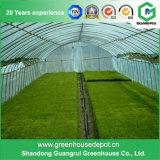 Efficiënte Serre voor Hydroponic Groeiend Systeem Nft voor Tomaat en Sla