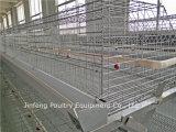 Nuova strumentazione di pollicultura di /Automatic di disegno per la gabbia del pollo di strato