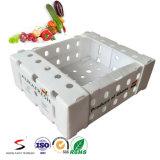 Caixa de dobramento da caixa Recyclable da fruta de Corflute do Polypropylene com impressão