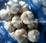 L'ail blanc pur avec sac de maillage