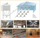Alimentatori e bevitori d'acciaio del pollo del silo per il sistema dell'alimentazione principale