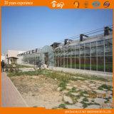 Casa verde do Transmittance claro elevado da parede de vidro