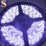 335 60LED SMD/M Bande LED