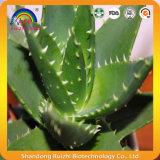 Aloe Barbadensis con l'Aloe-Emodina di 98%