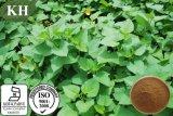 공장은 100% 자연적인 고구마 잎 추출을 공급한다