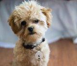 애완 동물을%s 중요한 추적자 전화 측정기 지갑 로케이터 반대로 분실된