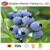 Uva-do-monte congelada da qualidade superior com bom preço