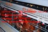 Hete het Landbouwbedrijf van de kip Verkopend een Apparatuur van de Kooien van de Kip van de Laag van het Frame