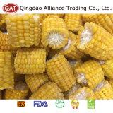 Épis congelés normaux de maïs d'exportation