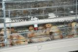 家禽耕作のためのAutomaticbabyの鳥小屋装置(タイプフレーム)