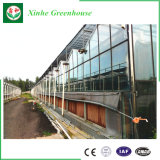 Fornecedor de vidro da estufa da agricultura da extensão de Mutil para as flores vegetais do tomate