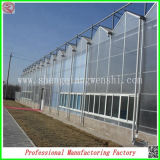 Size eccellente Glass Vegetable Growing Greenhouses con Light System