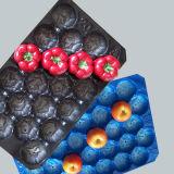 Plastik-pp. Tellersegment der Nahrungsmittelgrad-Frucht-