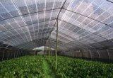 Réseau neuf d'ombre de Sun de Chambre verte d'agriculture