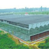 Китайский тип дом Venlo листа PC зеленая