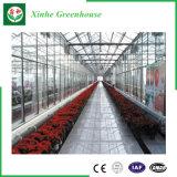 Type de Venlo serre chaude en verre pour le mini élevage de tomate