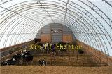 Refugios de Animales, el establo de caballos la vaca, la vivienda XL-306515Tienda (R)