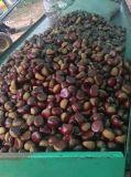 2016 новых экспортных органических 40-60 свежие Каштановые