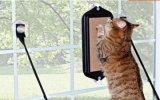 Wellpappen-Haustier-Kratzer-Kasten-Befestigung auf Glas durch Sucker